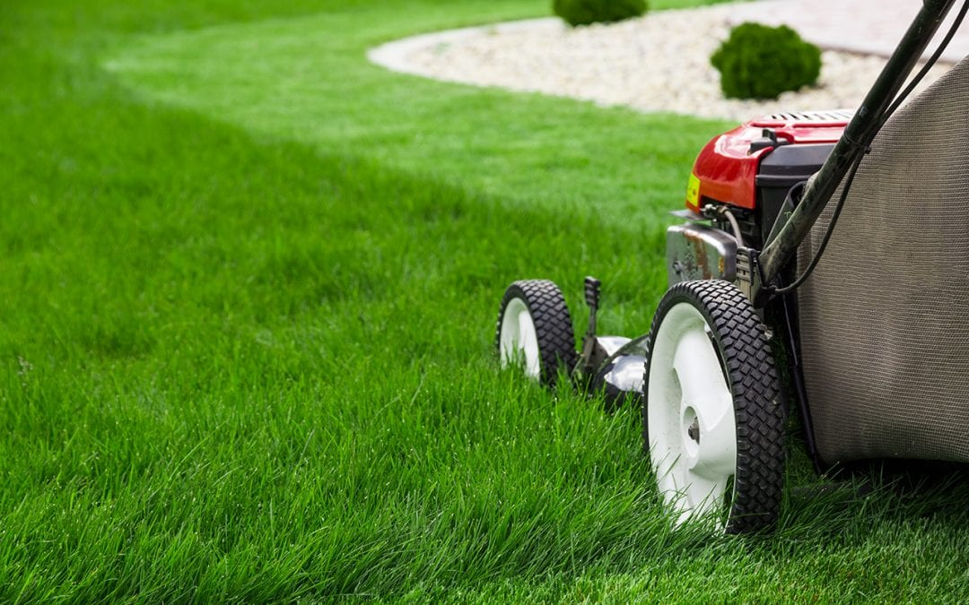 keep your lawn healthy